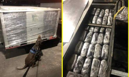 ¡Policía Federal aseguró 150 paquetes de aparente marihuana en Guadalajara!