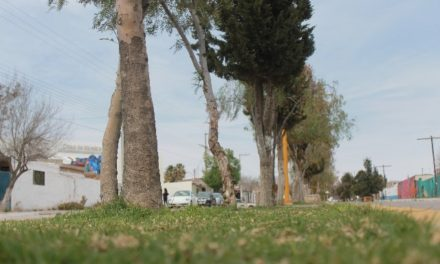 ¡El Gobierno de Jesús María y empresas locales trabajan en conjunto en el mantenimiento de espacios públicos!