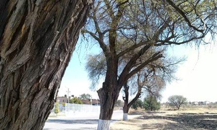 ¡Inicia Pabellón de Arteaga su conversión en Nicho Ecológico del Mezquite!