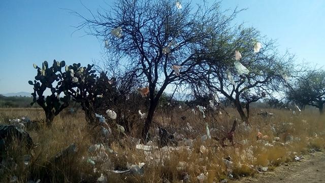 ¡Urge prohibir las bolsas de plásticos: PVEM!