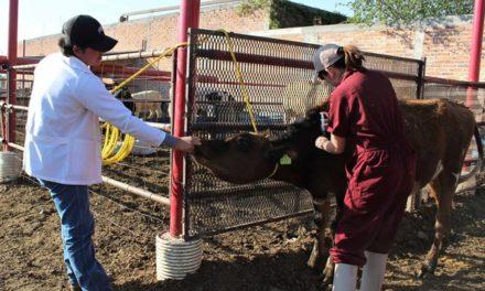 ¡Ofrece Municipio vacunación y desparasitación de ganado gratuita!
