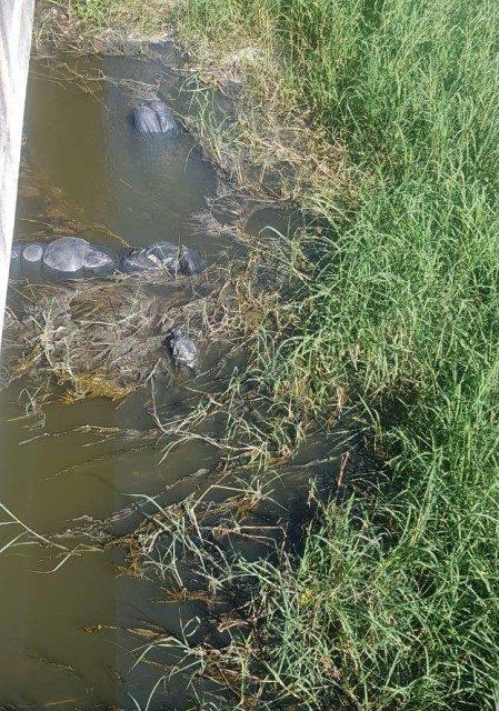 ¡Localizaron 19 bolsas con personas fallecidas abandonadas en canal de agua en Jalisco!
