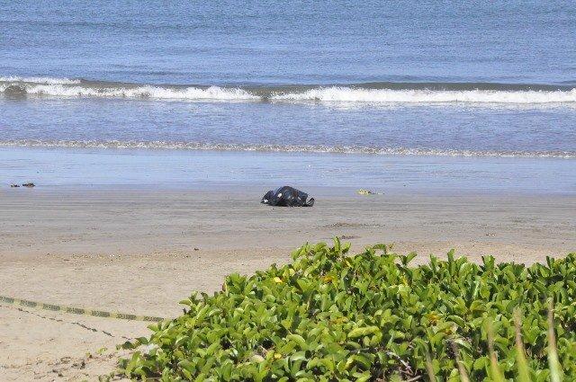 ¡Joven aguascalentense murió ahogado en Mazatlán!