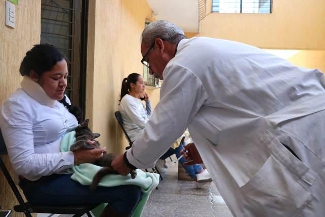 ¡Se realizó la tercera jornada de esterilización en Jesús María!