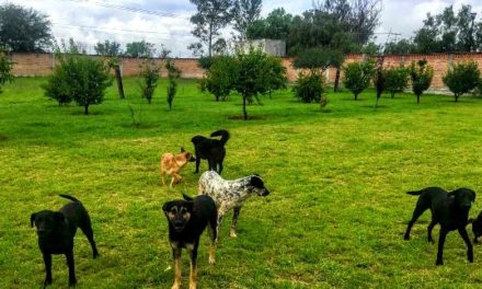 ¡Centro de Bienestar y Control Animal para Pabellón de Arteaga!