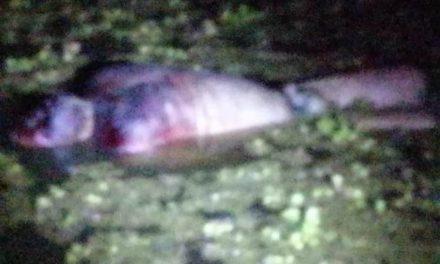 ¡Ejecutaron a un hombre y tiraron su cuerpo amarrado a una presa en Aguascalientes!