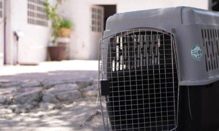 ¡Concluye campaña de esterilización de mascotas el Ayuntamiento de Pabellón de Arteaga!