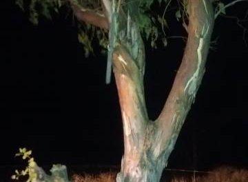 ¡Joven se colgó de la rama de un árbol para quitarse la vida en Aguascalientes!
