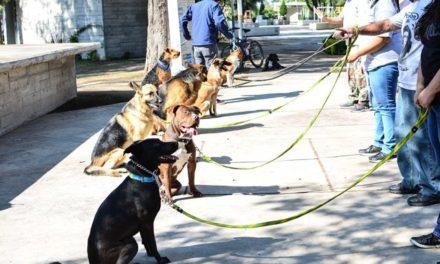 ¡Invita Municipio a cursos de adiestramiento canino!
