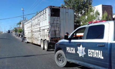 ¡Refuerza la SSPE el combate al robo de ganado en la entidad!