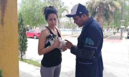 ¡Los servicios de vacunación y esterilización de mascotas son gratuitos: ISSEA!