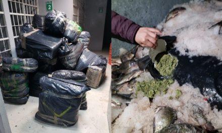 ¡Ejército Mexicano aseguró más de media tonelada de mariguana en el Estado de México!