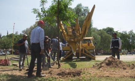 ¡Inicia la reubicación de los árboles de la zona del paso a desnivel de la avenida Salvador Quezada Limón!