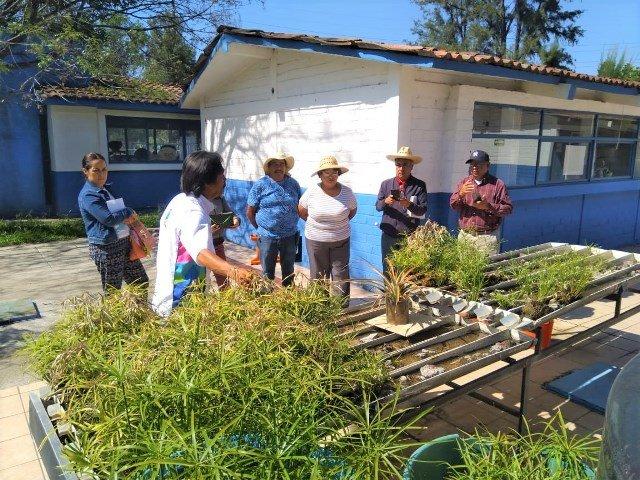 ¡Invita Municipio a talleres de Microhuertos Familiares!