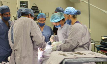 ¡Más de 100 trasplantes de órganos se realizan cada año en el CHMH!