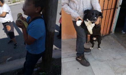 ¡Perro Bull-Terrier atacó a un niño en Aguascalientes y lo mordió en la boca!