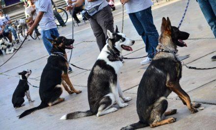¡Curso de Adiestramiento Canino suma 13 generaciones!