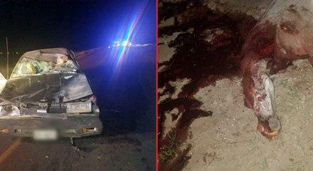 ¡Auto embistió 2 caballos en Aguascalientes y el copiloto murió al instante!