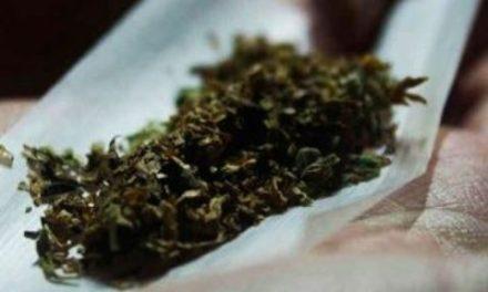 ¡Lo bueno y lo malo de la propuesta de legislación del cannabis!