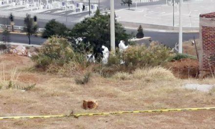 """¡Bajo un árbol """"sembraron"""" a un hombre ejecutado y encobijado en Zacatecas!"""