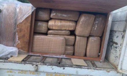 ¡Ejército Mexicano aseguró más de 950 kilogramos de marihuana en el Estado de San Luis Potosí!