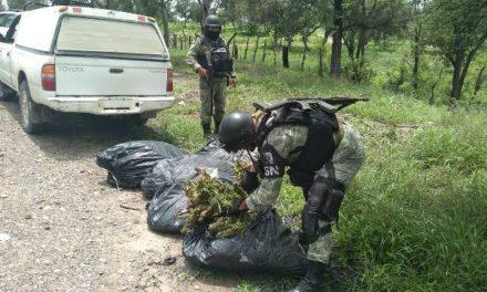 ¡Efectivos de la Guardia Nacional aseguraron 48 kilos de marihuana en Teocaltiche!