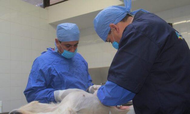 ¡Anuncia Municipio de Aguascalientes nueva campaña gratuita de esterilización canina y felina!
