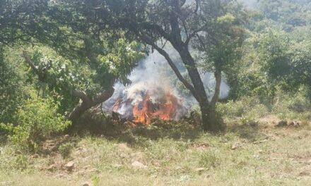 ¡Ejército Mexicano localizó y destruyó más de una hectárea de marihuana en el Estado de Jalisco!