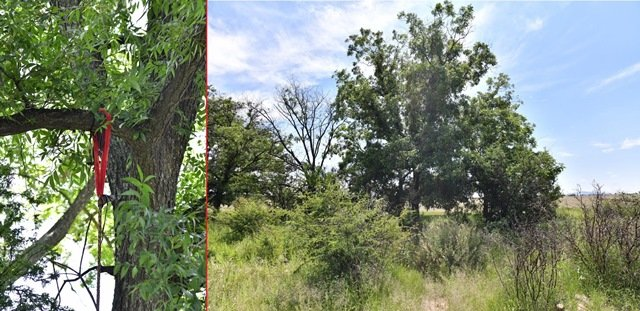 ¡Hombre se quitó la vida colgándose de la rama de un árbol en Aguascalientes!
