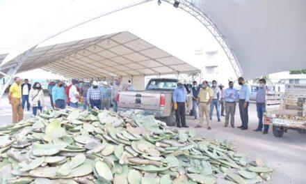 ¡Apoya Municipio de Jesús María a casi 100 productores con nopal!