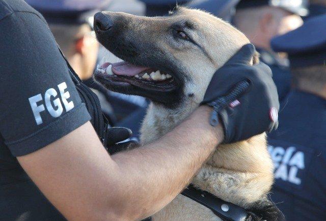 ¡Inician proceso penal a sujeto que hirió a un perro con un machete en Aguascalientes!