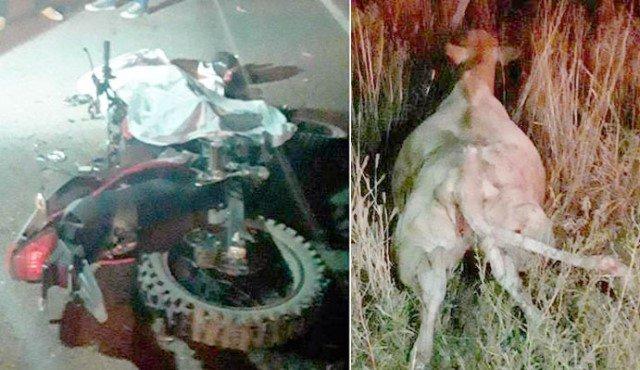 ¡Adolescente motociclista murió tras chocar contra una vaca en Pánfilo Natera!