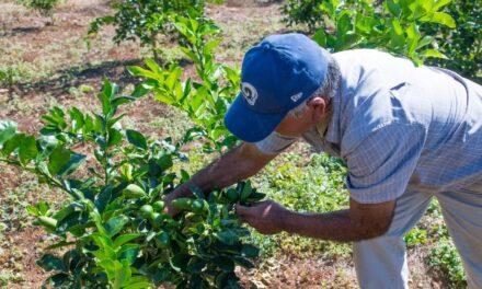 ¡Nuevos cultivos en Aguascalientes, el gran logro en el campo durante este gobierno: MOS!