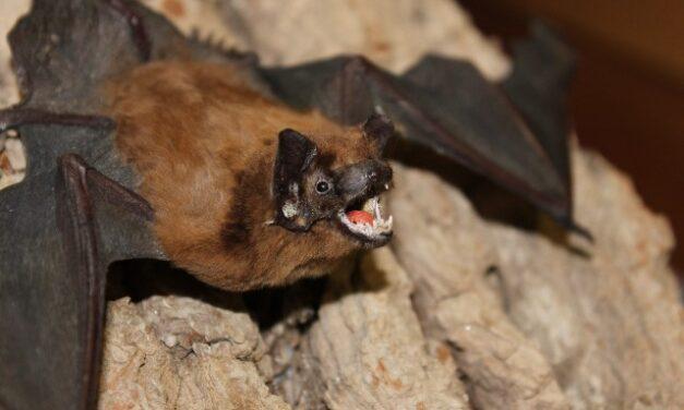 ¡ISSEA emite medidas preventivas para evitar la rabia transmitida por animales silvestres!
