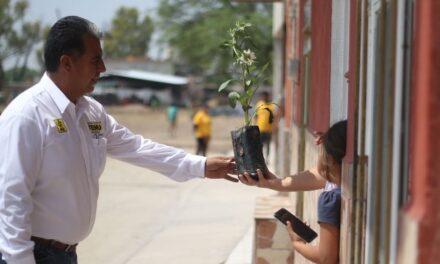 ¡Árboles en lugar de volantes distribuye Cuauhtémoc Escobedo en el Distrito III!