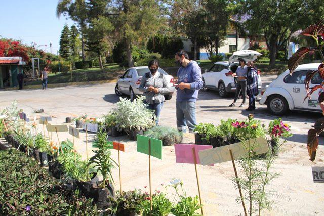 ¡Más de 5 mil 500 plantas ha donado el Vivero Municipal a ciudadanos ambientalmente responsables!