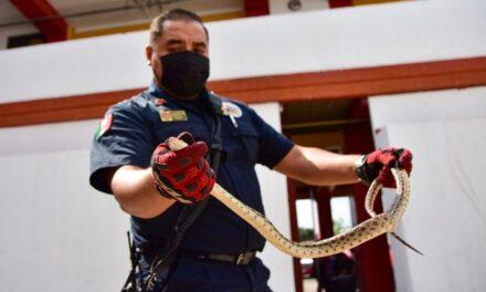 ¡Alerta Protección Civil Municipal por presencia de serpientes en temporada de lluvias!